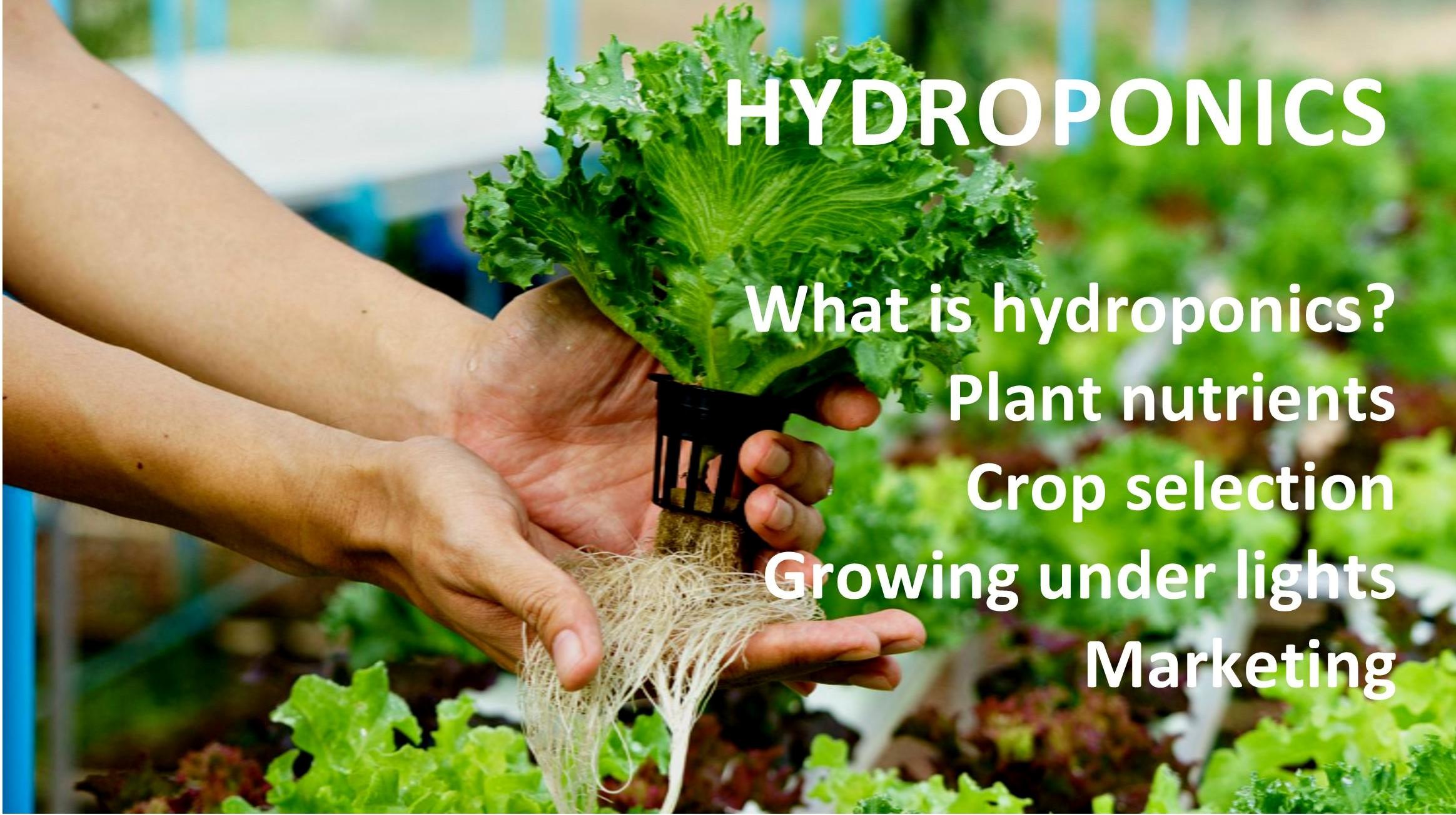 Departments - Hydroponics