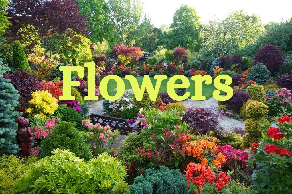Departments - Flowers