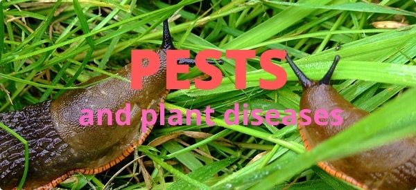 Departments - Pests and Plant Diseases