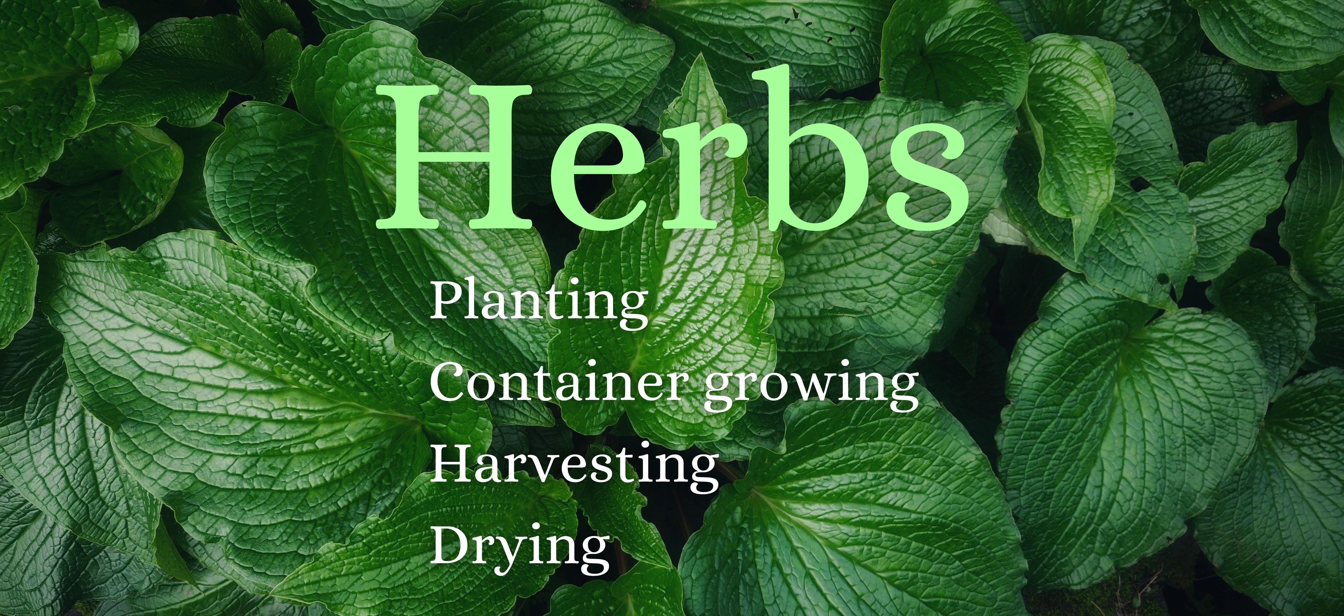 Departments - Herbs