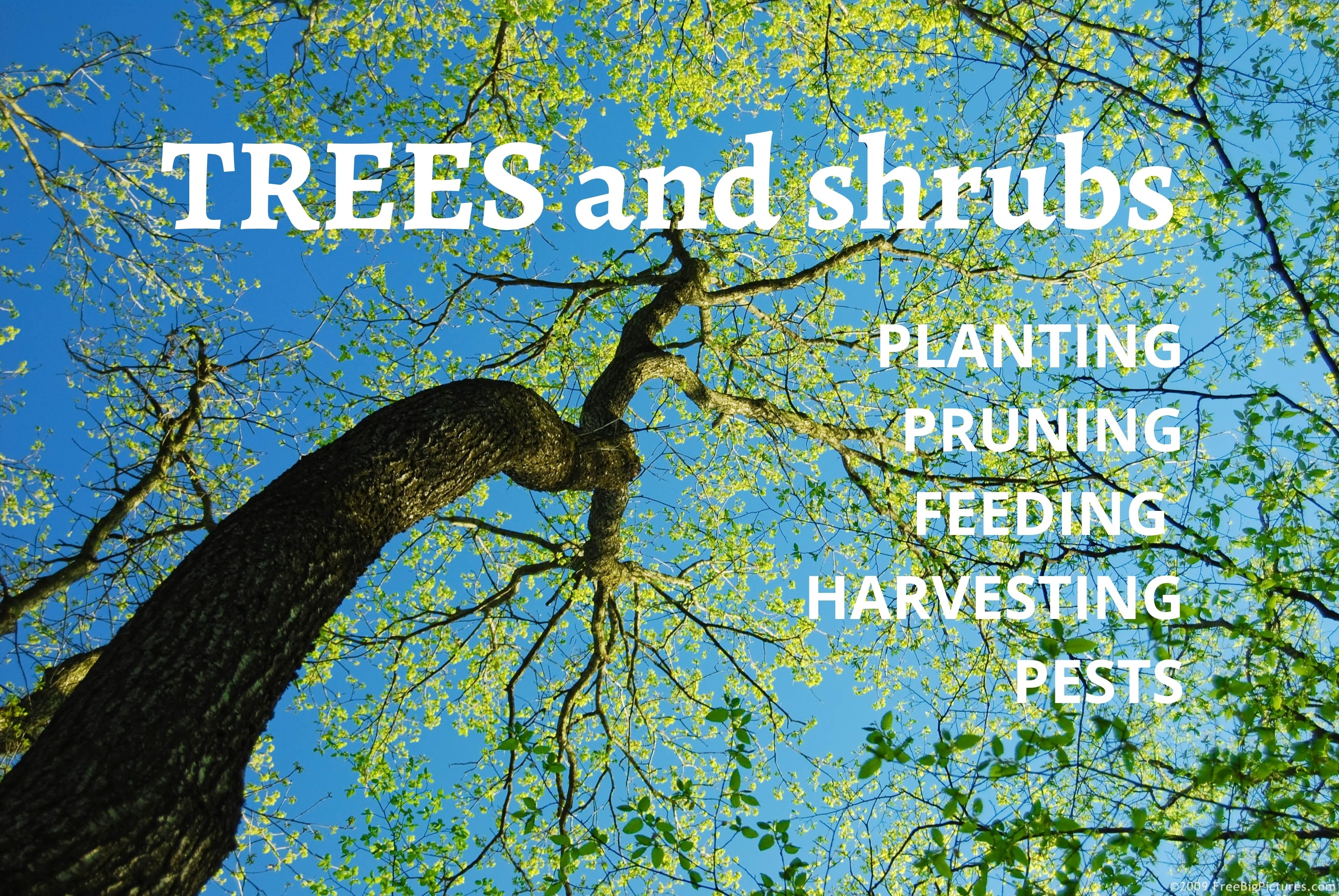 Departments - Trees and Shrubs